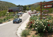 Mount Olive4