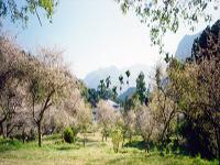 台灣.錫安山.大梅園