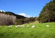 亞拉臘山4